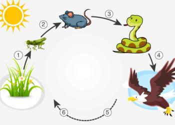 Hệ sinh thái là gì? Các loại hệ sinh thái nào? giải đáp ở đây