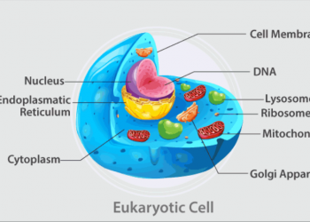 Sự khác biệt giữa tế bào nhân sơ và tế bào nhân chuẩn