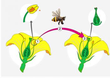 Thụ phấn là gì? Quá trình thụ phấn và Các loại thụ phấn