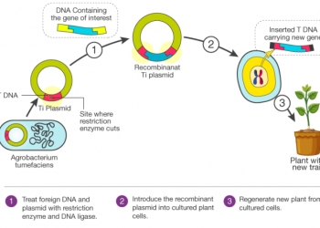 Công nghệ DNA tái tổ hợp